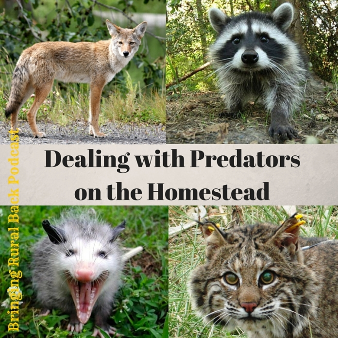 Dealing with Predators on the Homestead