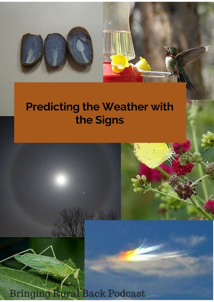 Predicting the Weather with the Signs